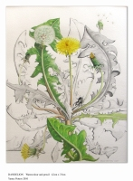 The Art Hand tutor and Botanical Painter Yanny Petters