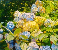 Late Summer, Blue Hydrangeas © Patrick Palmer 2009